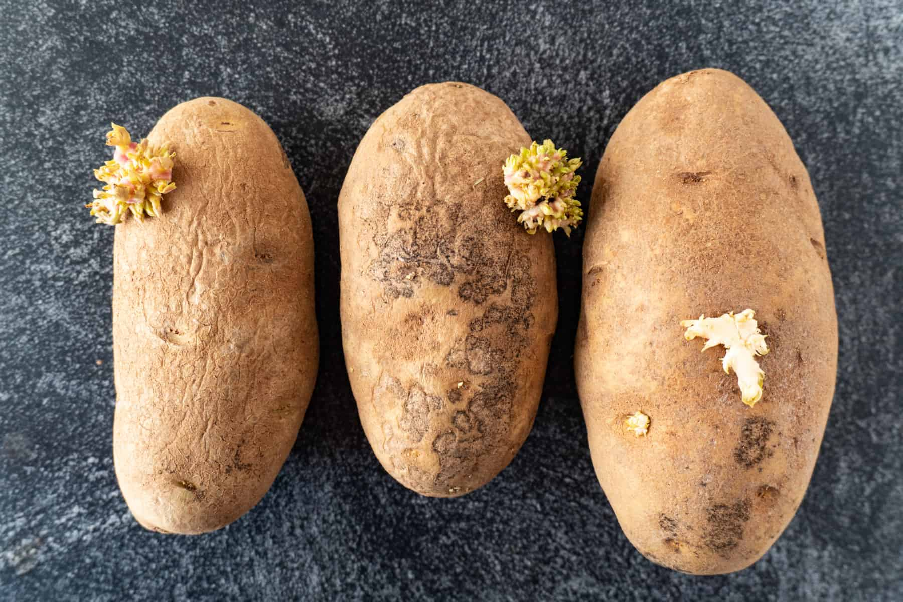three russet potatoes with sprouts