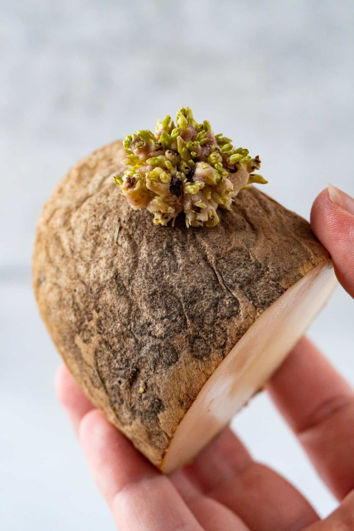 holding half a sprouted potato in hand-