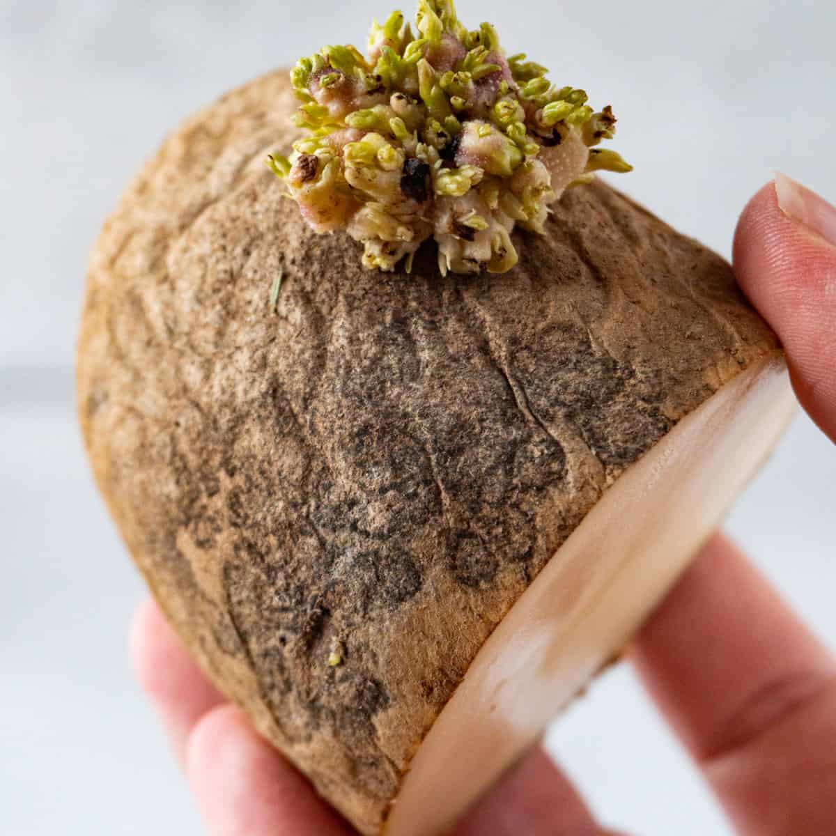 bad potato held in hand featured image