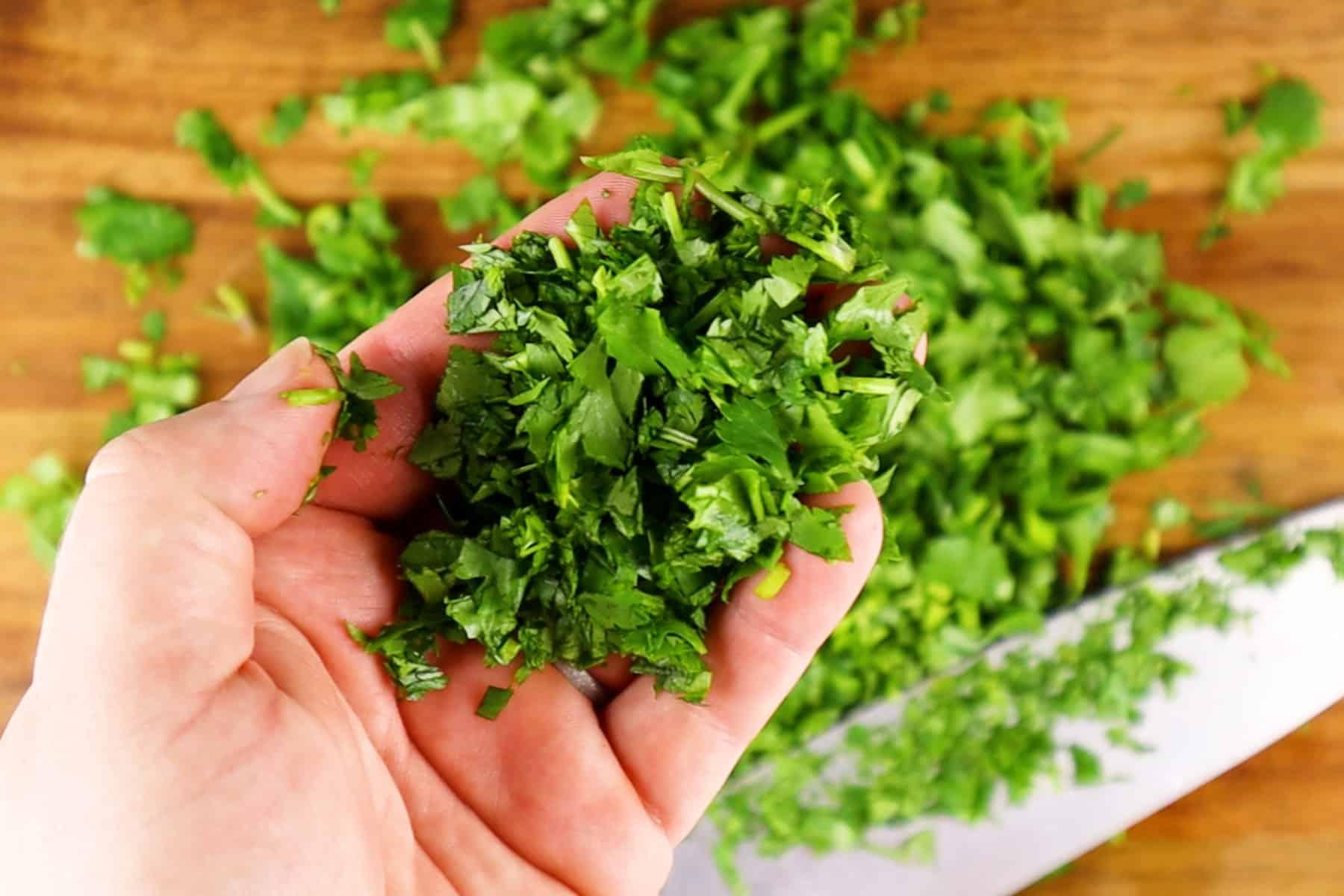 cilantro cuttings in hand