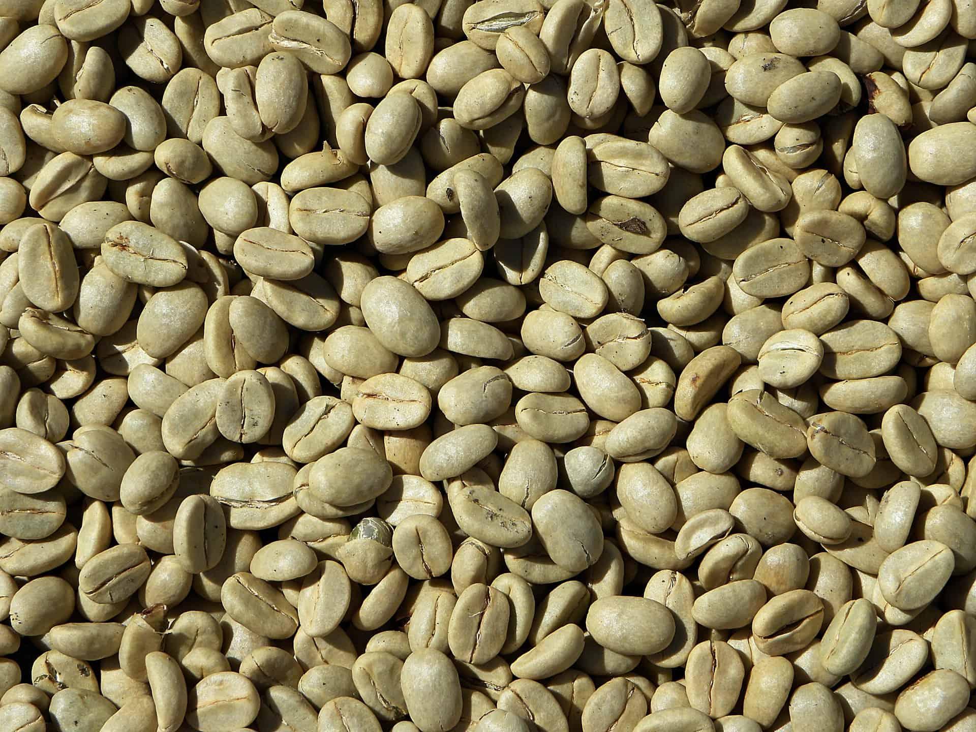 raw coffee beans